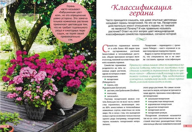 Пеларгония (Герань) - Страница 2 Fc4d8710