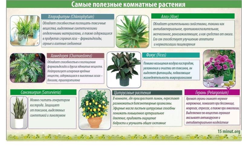 статьи о растениях из  газет и журналов - Страница 7 Samye-10