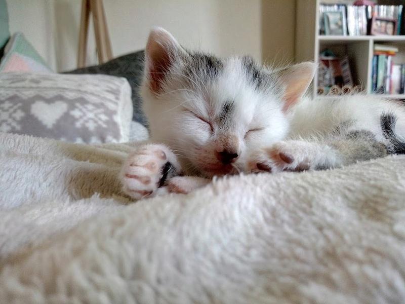 Cracotte femelle type européenne blanche et tigrée née le 4 avril 2017 - Page 2 Img_2048