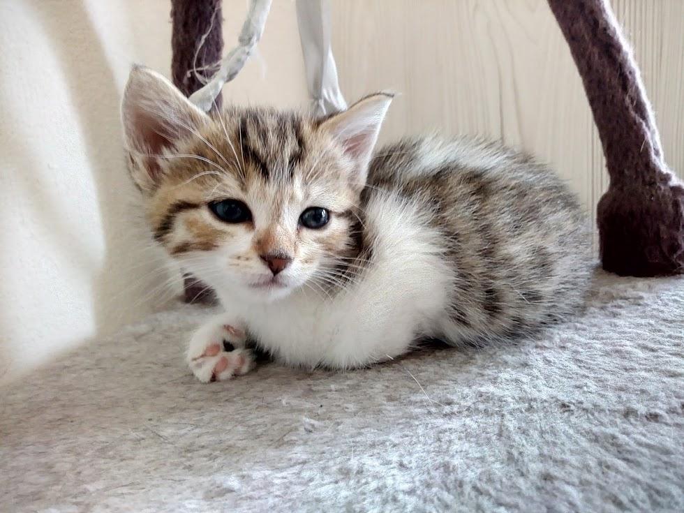 Cracotte femelle type européenne blanche et tigrée née le 4 avril 2017 - Page 2 Img_2065