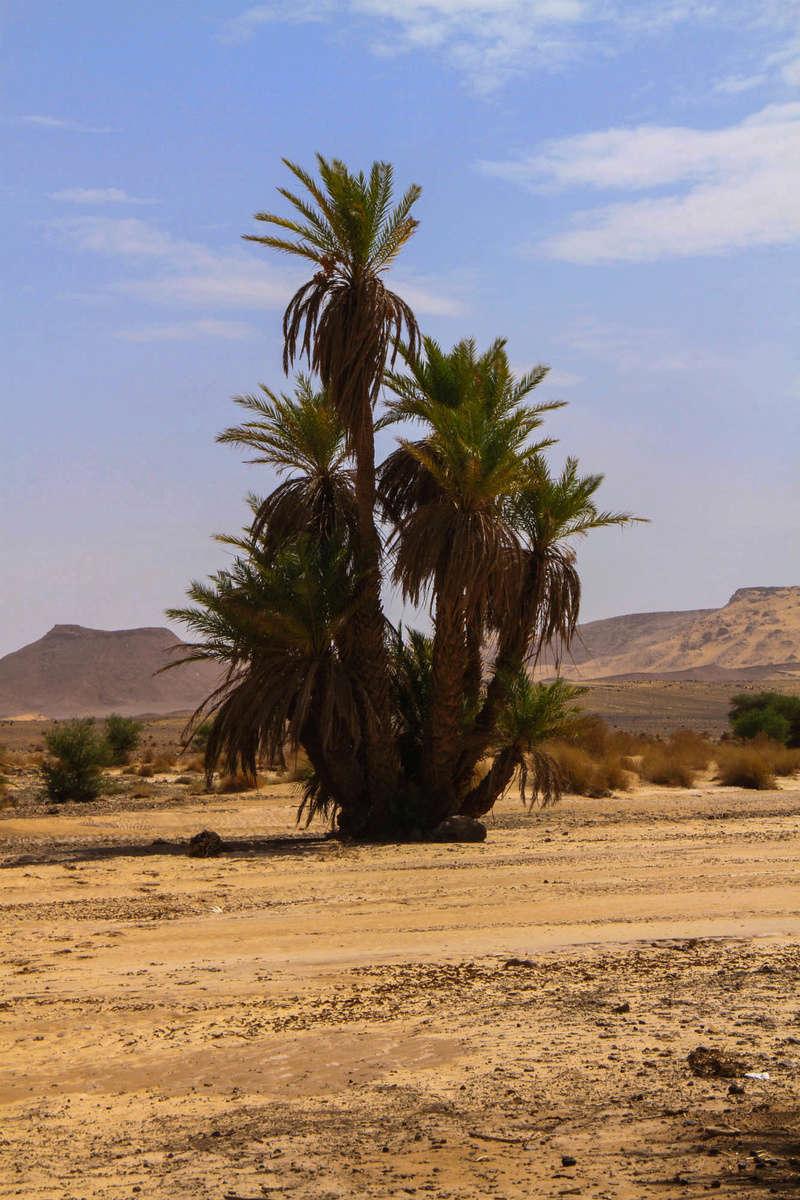 Retour raid des sables 2017 - Page 5 Raid_689