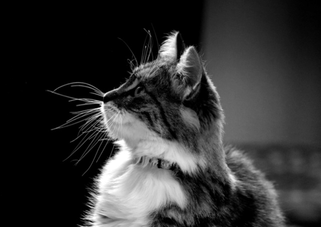 Le temple des chats - Page 6 Img_3011