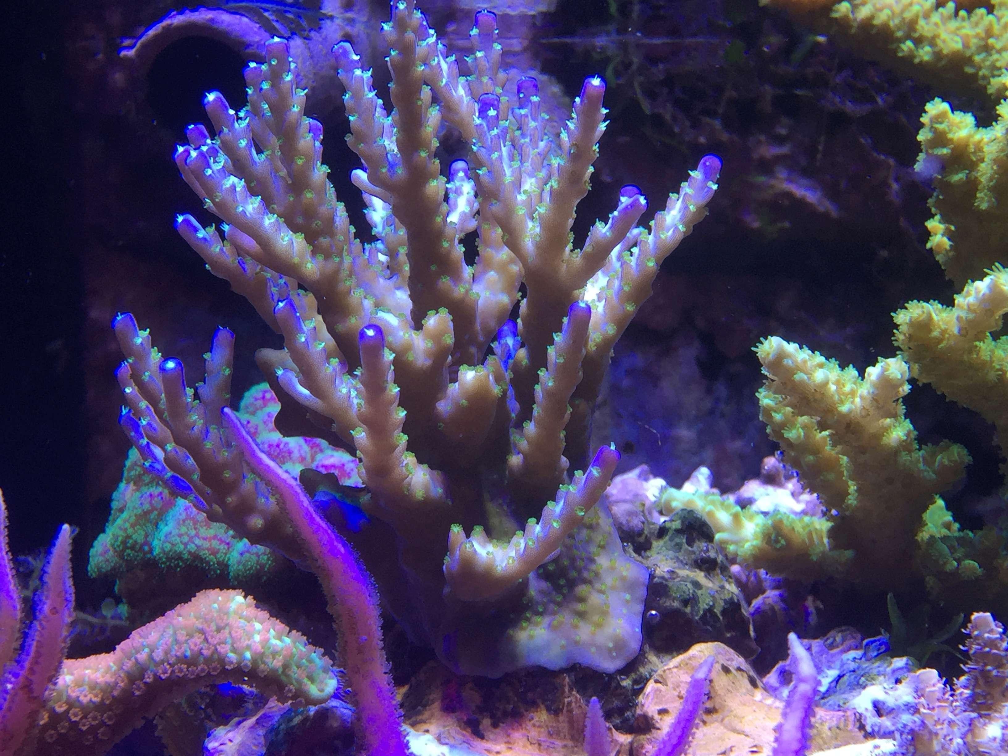 Red sea 170 sebbordeaux - Page 4 Aa7e2b10