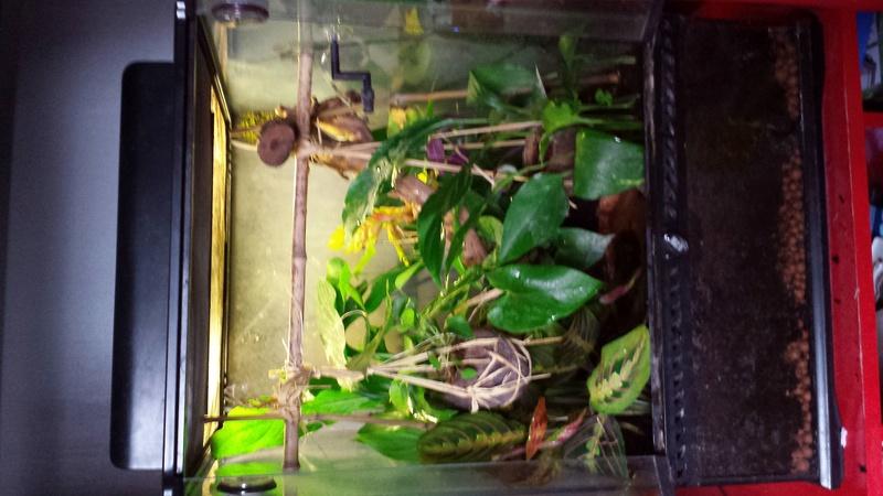 Filtre bassin grenouille Photo_10
