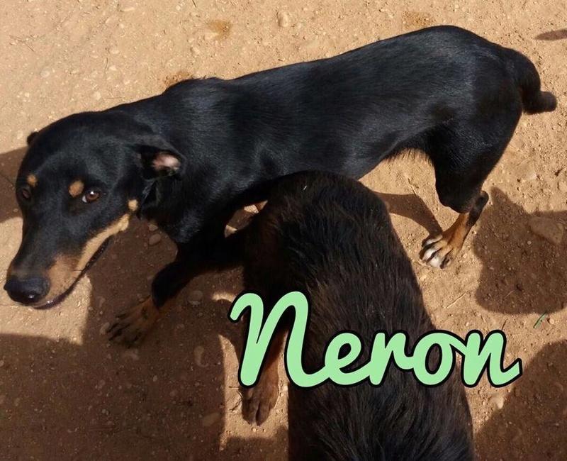 NERON - ES (Raquel) 22279710
