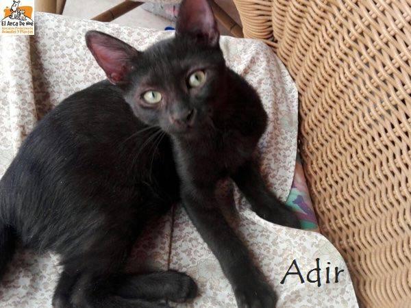 ADIR - NOIR - ES (Sole) 23131010