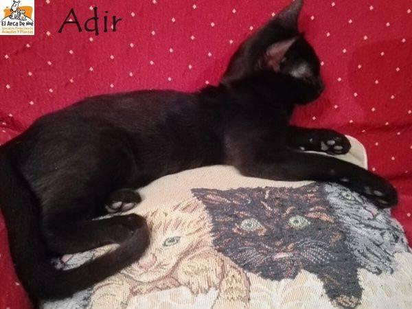 ADIR - NOIR - ES (Sole) 23132010