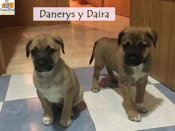 DANAERYS - ES (Sole) 25348210