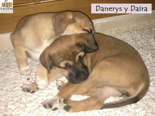 DANAERYS - ES (Sole) 25443211
