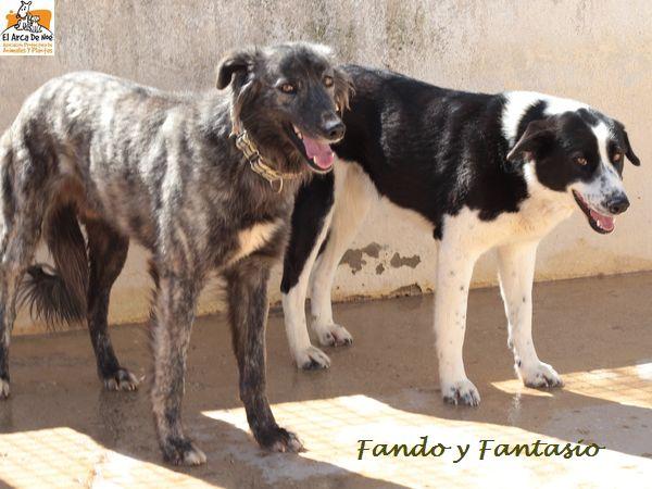FANDO - ES (Sole)  Img_8712