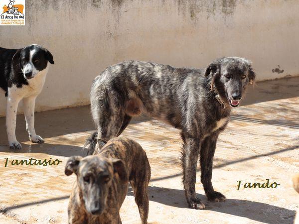 FANDO - ES (Sole)  Img_8713