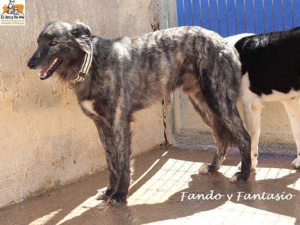 FANDO - ES (Sole)  Img_8714