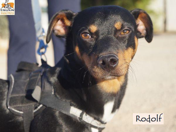RODOLF - NOIR ET FEU - ES (Sole) Rodolf17