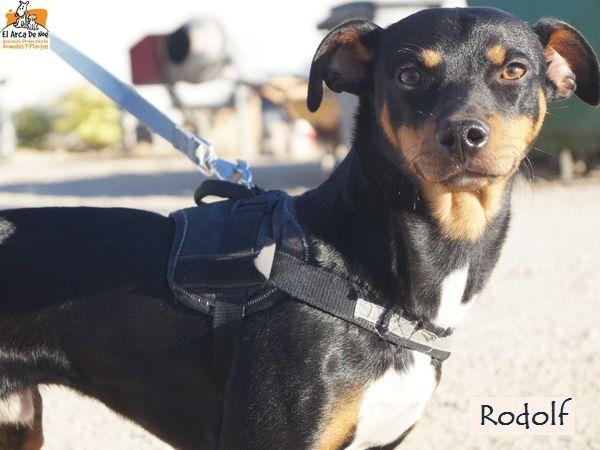RODOLF - NOIR ET FEU - ES (Sole) Rodolf19