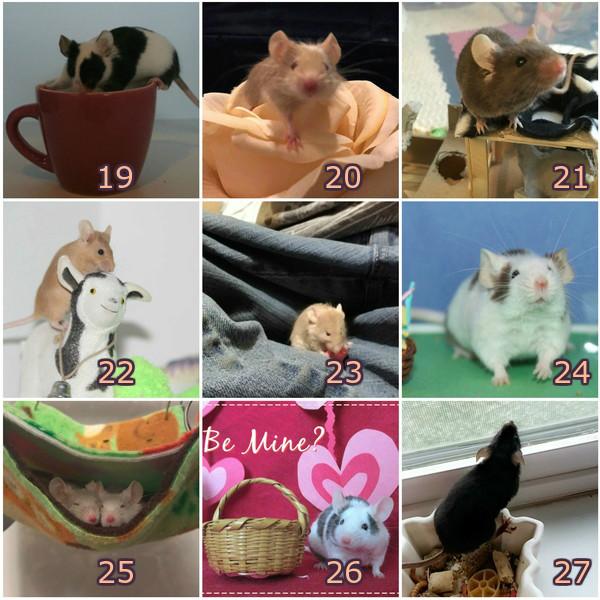 Spring '18 Photo Contest Collag14