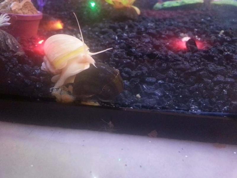 Betta Fish! Fb_img12