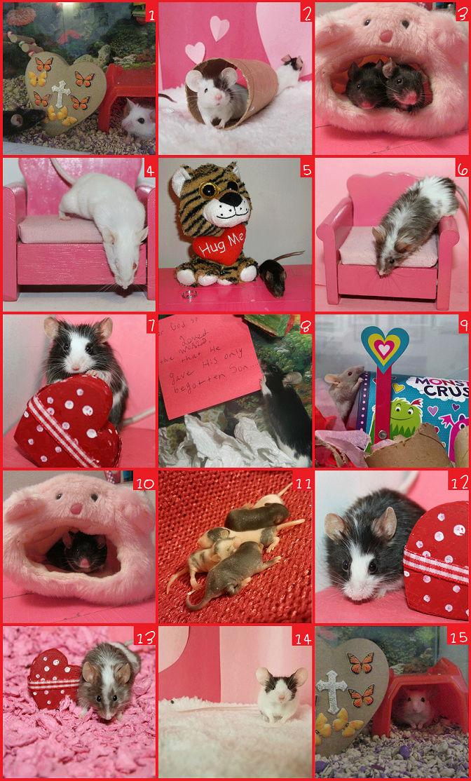 VOTE -- Valentine's Day Photo Contest (Poll Added) Vday_c11