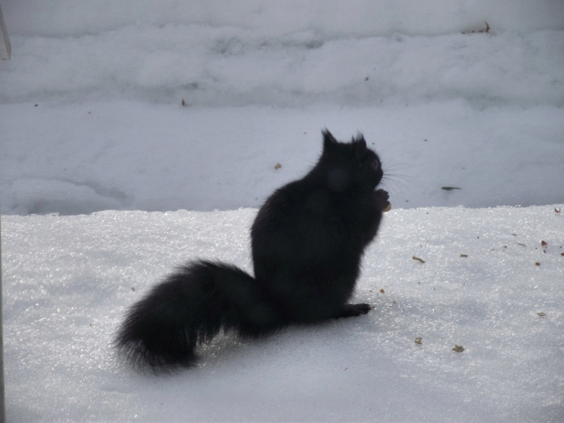 Pas de marmotte mais ,,, 22_fyv10