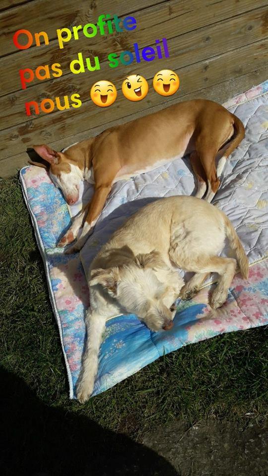 Carmona, adorable podenca, 2ans Adoptée  - Page 3 29133310