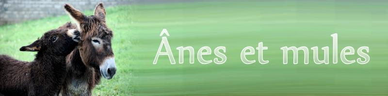 chevaux et poneys à sauver Anes10