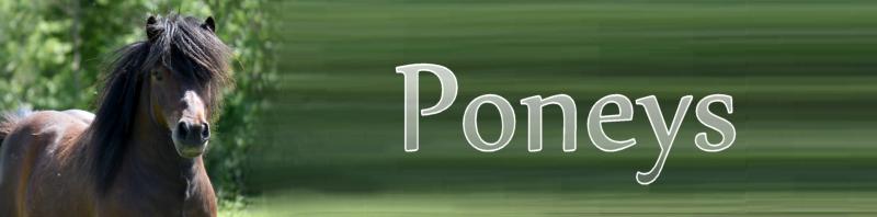 chevaux et poneys à sauver Poneys10