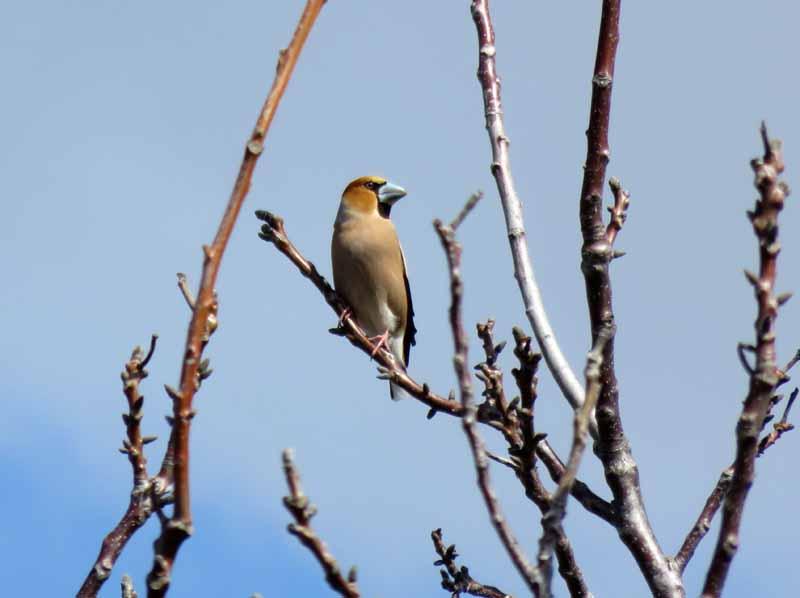 Oiseaux de Bulgarie. - Page 3 Img_6214