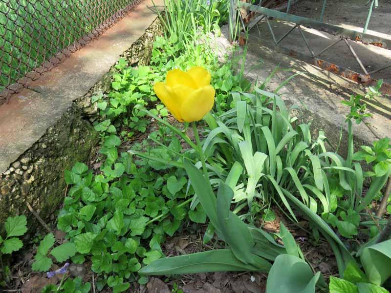 Floraisons du mois d'avril - Page 20 Img_6512
