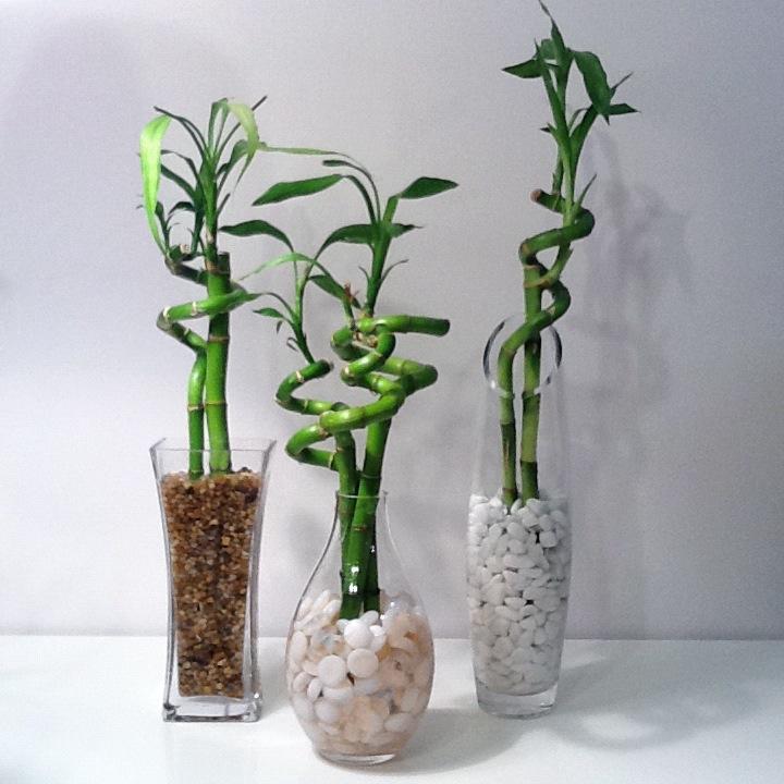 Les plantes, toxiques pour les chats Luckyb10