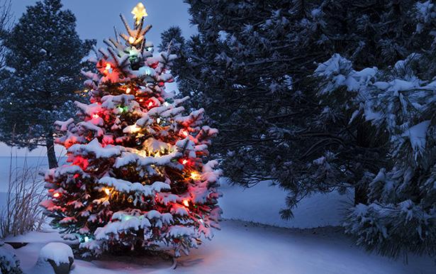 Bonnes fêtes  Noel-i10