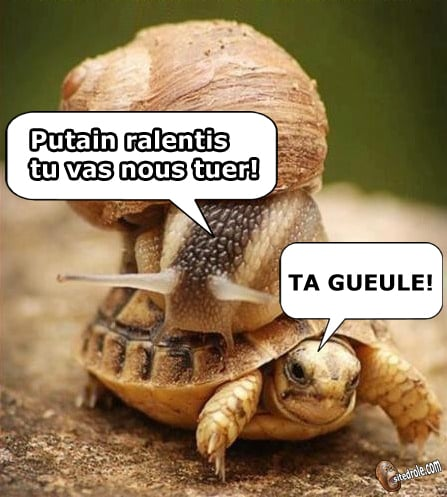 Images droles - Page 8 Tortue10