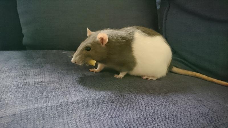 Ma ratoune s'en est allée Charlo12