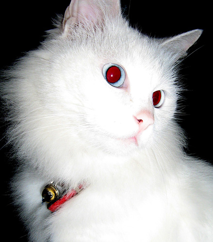 Sofiel, Cat Demon 310