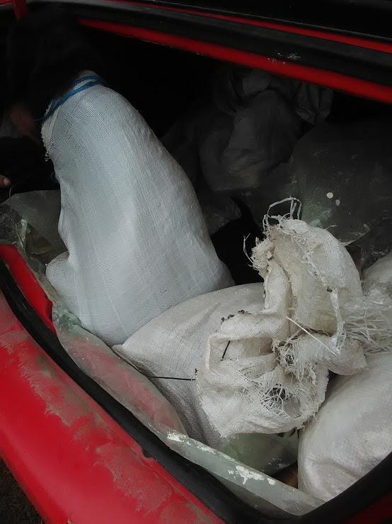 Christo - CHRISTO, mâle, noir poitrail blanc, né en NOV 2017, portée de Naola trouvé enfermé dans un sac- Marrainé par Magda D. -R-SC Img_2014