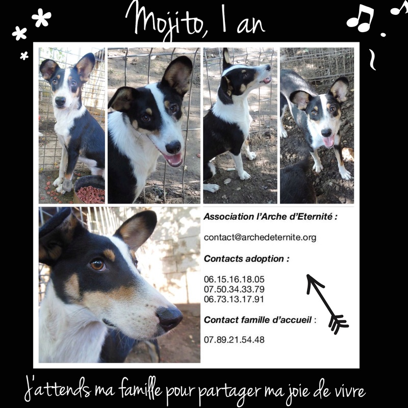 AFFICHES FAITES PAR KARINE MUDET Mojito10
