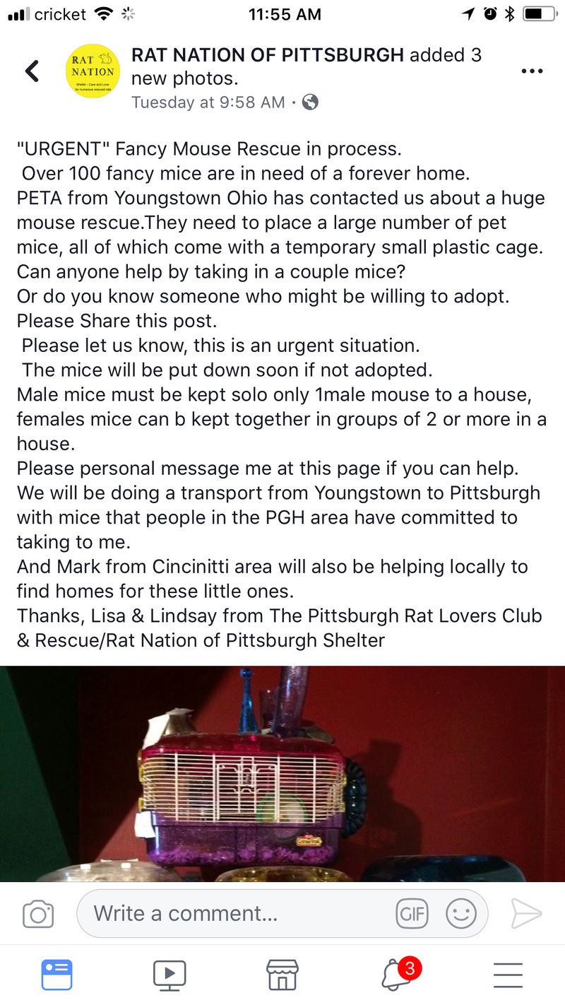 Mice In Youngstown, Ohio or Pittsburgh, PA (just passing info along) 63407910
