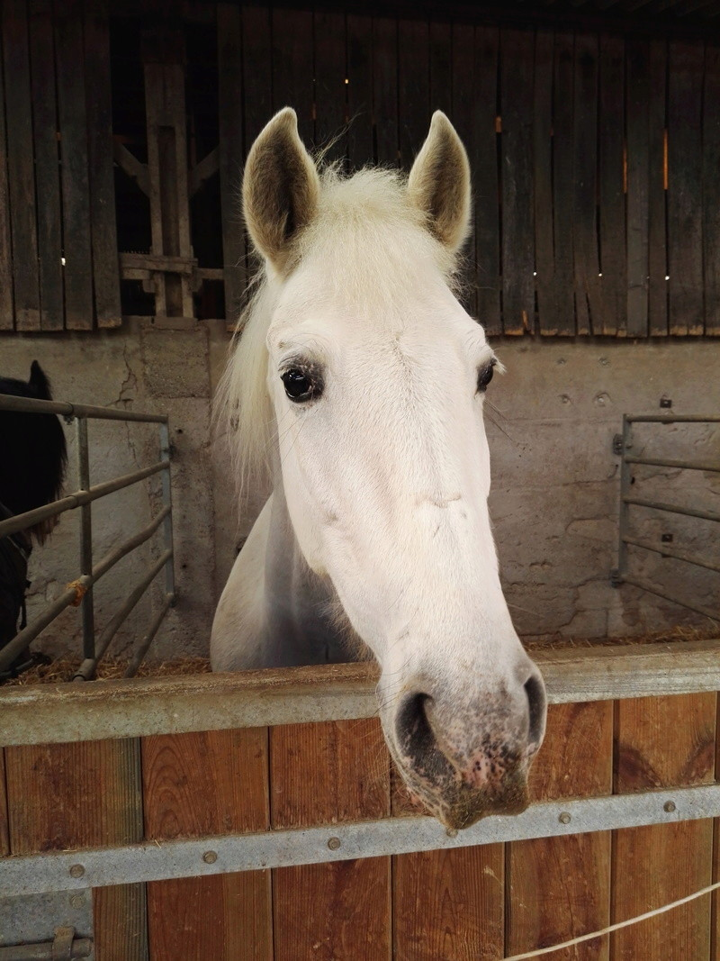 Peti cheval, nouveau partenaire  Img_2010