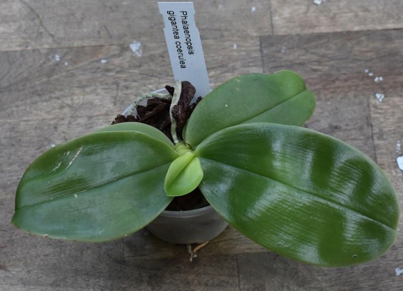 Orchideen-Neuzugang - Seite 41 Nr_80110