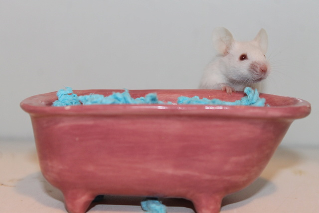 The mice and a (pretend!) bathtub :) Img_1115