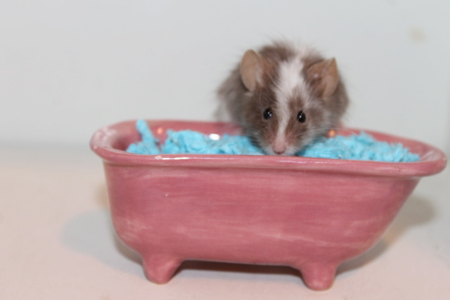 The mice and a (pretend!) bathtub :) Img_1117