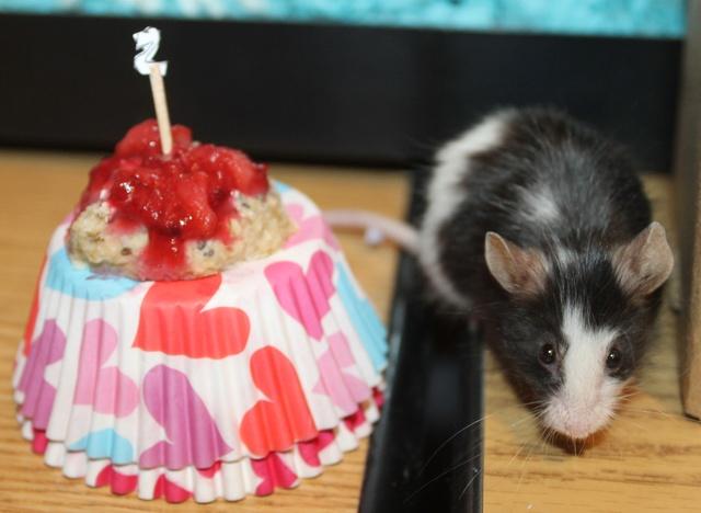 Happy second birthday Blossom! Img_4214