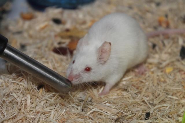 PEW mice ears Img_7413