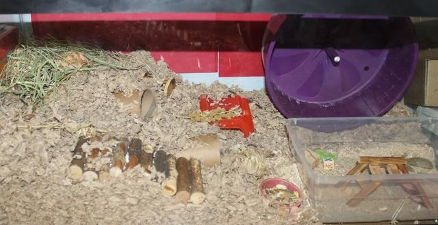 Syrian Hamster set ups Img_7419