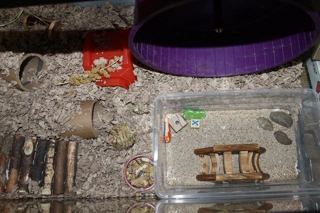 Syrian Hamster set ups Img_7420