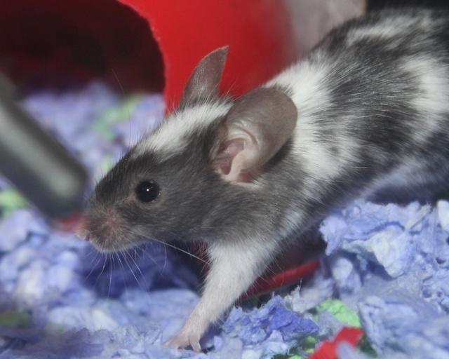 Meet Amber! Img_8622