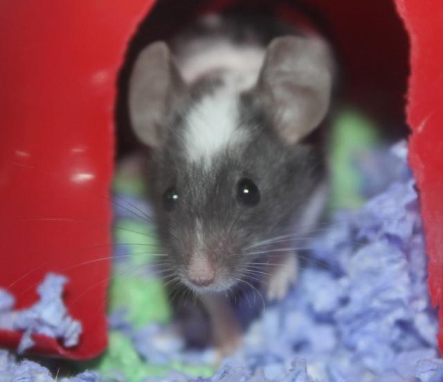 Meet Amber! Img_8623