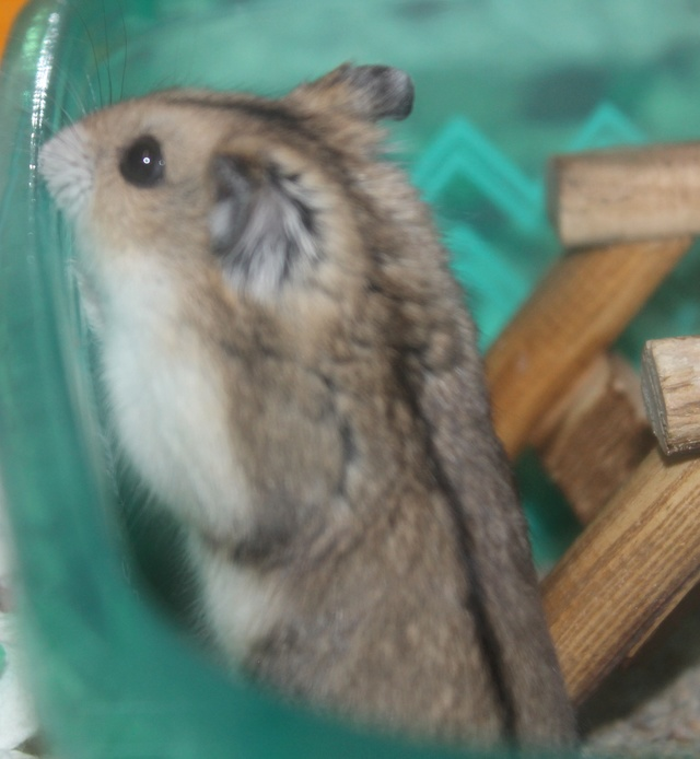 The new hammy! (Totally unexpected!) Img_8813
