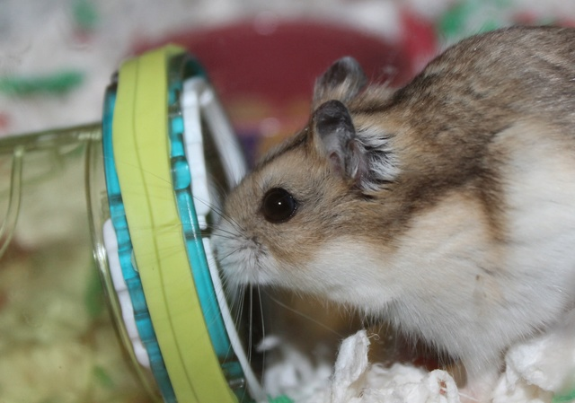 The new hammy! (Totally unexpected!) Img_8815