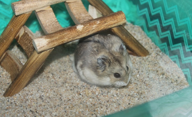 The new hammy! (Totally unexpected!) Img_8914