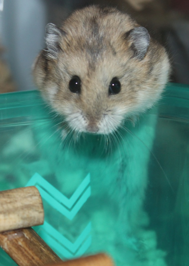 The new hammy! (Totally unexpected!) Img_8927