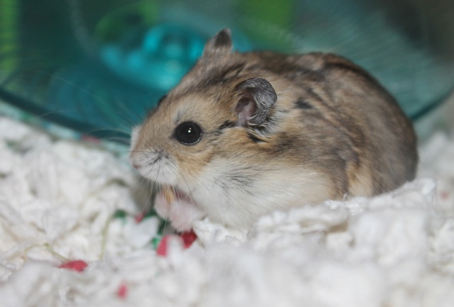 The new hammy! (Totally unexpected!) Img_8928
